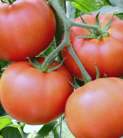 Easy Steps for Freezing Whole Tomatoes