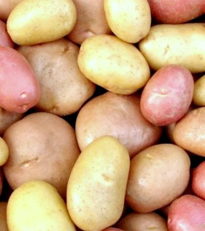 All things Potatoes
