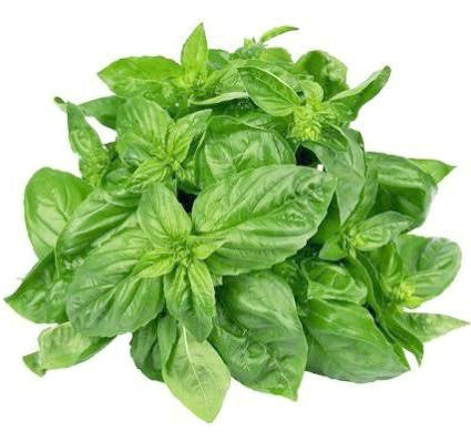 what is basil chiffonade