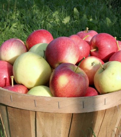 Fun Facts About Apples