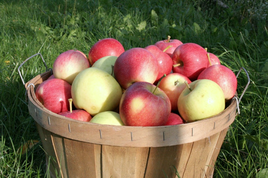 large-basket-of-apples